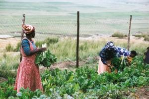 Sizanani - NGK werk in Zulu-land